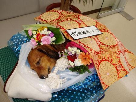 dog/PB200145